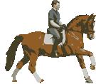 Dressage Horses De Doncker